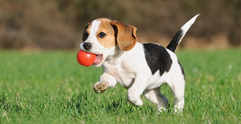 como adestrar seu cachorro para fazer necessidades no lugar certo