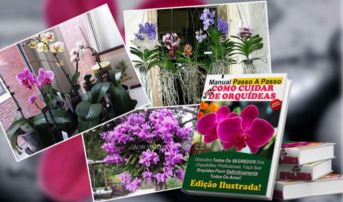 manual de orquideas online