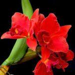 images images orquideas 8