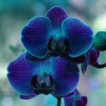 images images orquideas 7