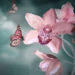 images images orquideas 6