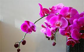 images orquideas